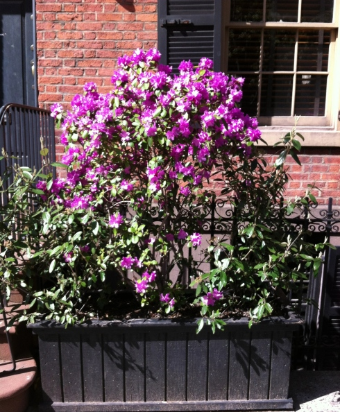w12th-street-flower-box